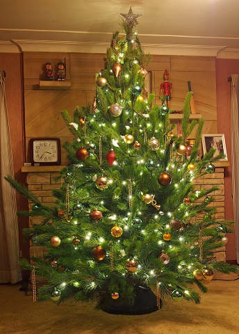 Live Christmas Tree - Mid Sized 8 foot, Golden Lustre and Champagne decorations