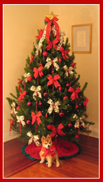 Live Christmas Tree - Mid Sized 8 foot, Traditional Red and Green decorations